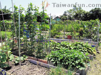 Urban farming: Taichung city residents return to the soil