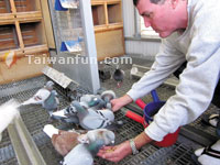 Taiwanese pigeon racing wins local and foreign fans